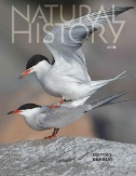 Natural History Magazine Subscriptions