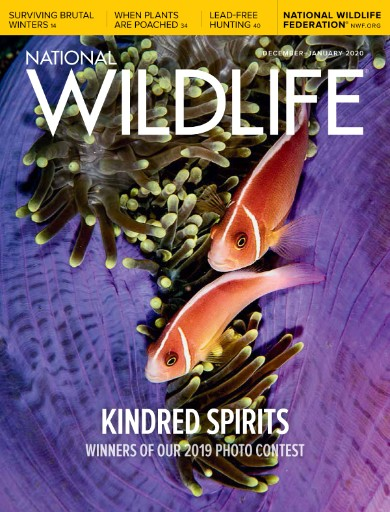 National Wildlife (World Edition) cover
