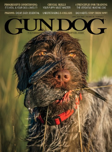 Gun Dog Magazine Subscriptions