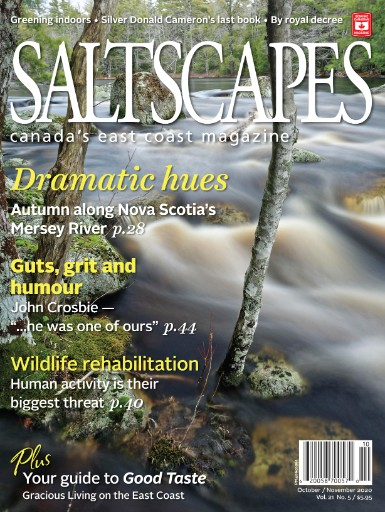 Saltscapes Magazine Subscriptions