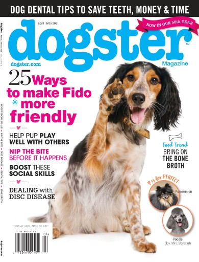 Dogster Magazine Subscriptions