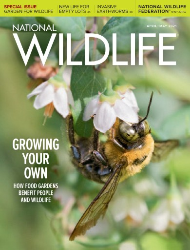 National Wildlife (World Edition) Magazine Subscriptions