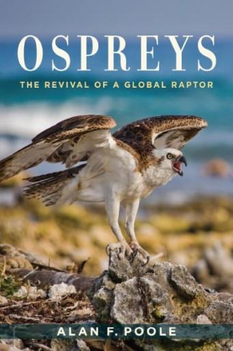 Ospreys : The Revival of a Global Raptor